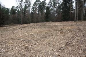 Abb. 3 Blick von Süden auf die Fläche für WEA-2 am Stempel nach zärtlicher Oberflächenbehandlung