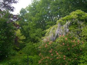 Wunderschöner Kontrast: blühende Sträucher des Vitosgeländes und artenreicher Wald