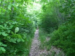 Ein Weg macht den Waldreichtum erlebbar