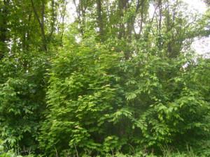 Sehr artenreicher Waldrand